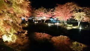 曽木公園逆さもみじライトアップ4
