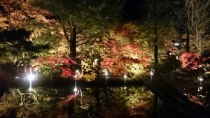 曽木公園逆さもみじライトアップ2