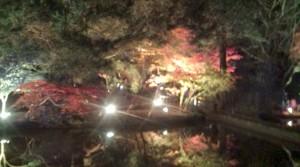 曽木公園逆さもみじライトアップ3